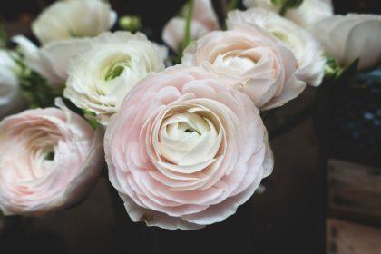 花の不定期お届け便 正月 新年 生花 セレクト お墓 池袋 練馬 小石川 西武池袋線
