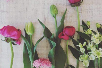 花の気まぐれ不定期便 お知らせ 市場 春 桜 池袋 小石川 市ヶ谷