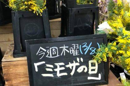 世田谷市場 花 ミモザ 不定期便 アレンジ