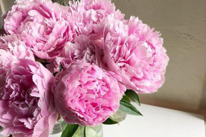 芍薬 花のある暮らし 季節 綺麗 楽しむ