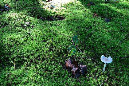 庭 苔 軽井沢 手入れ 育てる 山荘 木漏れ日